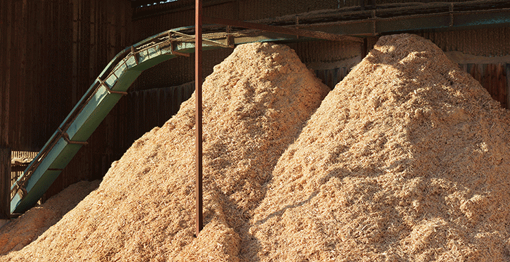 Parametry skupu biomasy drzewnej